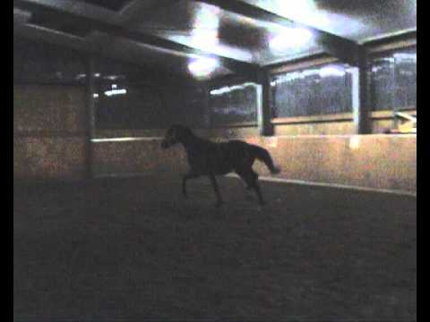 Quasar de Noir v Quaterback – Michelangelo – For SALE – Top Dressage Joungster, Dressurpferd 1