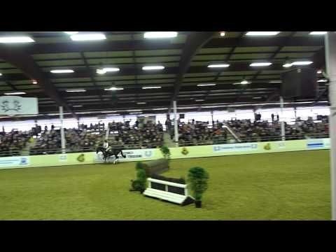 Trakehnerhengst Houston in Münster 2012