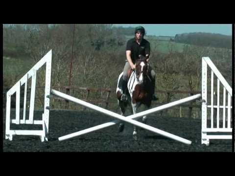 Vagebont – Tobiano KWPN Stallion