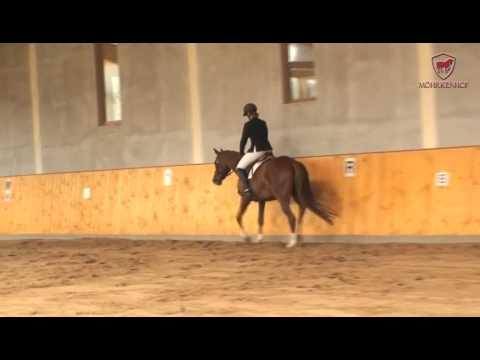 Pferdeauktion: Trakehner Stute von Hengst Camaro