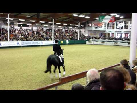 Abendtanz : Trakehner stallion approuved 2009
