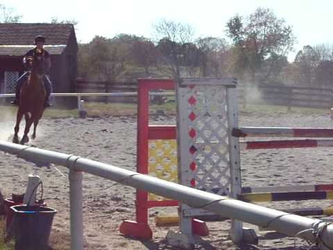 Jumping 4′ on my Trakehner