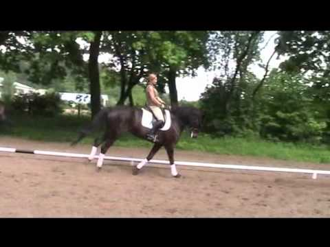 Tokata – 11 Year Old Trakehner Mare For Dressage (www.horsesales.lt)