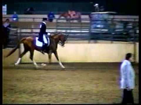 Aul Magic, Arabian sport horse stallion