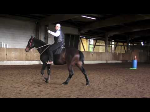Parelli ***** Master Instructor Berni Zambail, Young Horse Training under saddle
