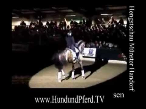 HorseJournal International presents Münchhausen Trakehner Hengst mit Fie Skarsöe