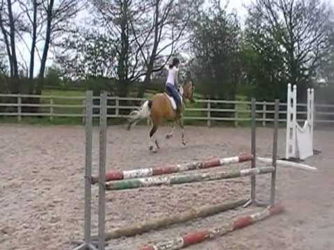 16hds BEAUTIFUL DUN AND WHITE TRAKENER X 4 YEAR MARE for sale