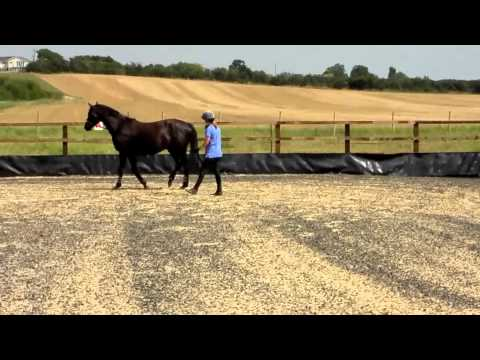 Soraya 3yo Trakehner by EH King Arthur with Tina Atkins for her 1st Lunge Lesson Part 1