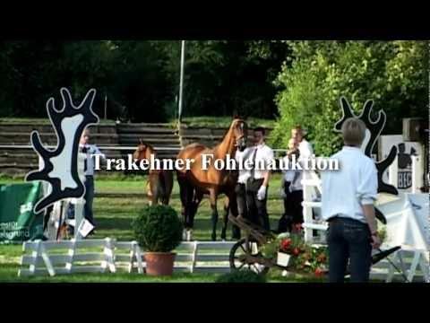 Trakehner-Fohlenauktion 2012