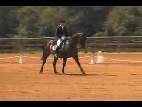 Libby, Trakehner, Dressage Showing PSG Part 4