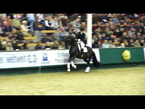 Hofrat Trakehner stallion V1