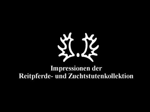 Impressionen der Reitpferde- und Zuchtstutenkollektion – Trakehner Hengstmarkt 2012