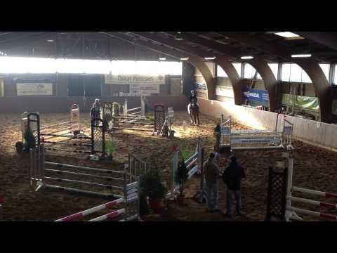 Herbstklang – 6-jähriger Trakehner Deckhengst – Springpferdeprüfung Raisdorf