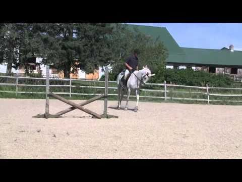 Diamond Girl: Jumping, Dressage, Eventing Trakehner for Sale