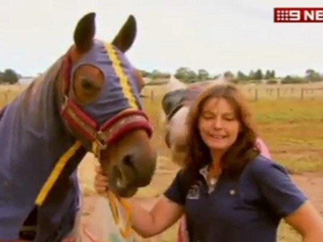 Drama am Strand: Pferd versinkt bis zum Hals