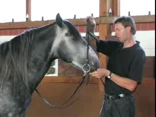 Junge Pferde schulen an der Hand