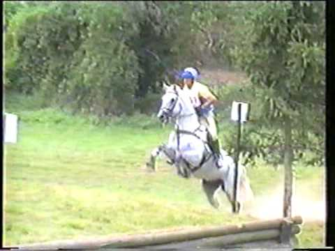 Special Memories trakehner show jumping stallion- eventing cross country