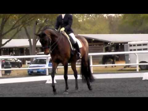 Wonderful FEI Schoolmaster For Sale