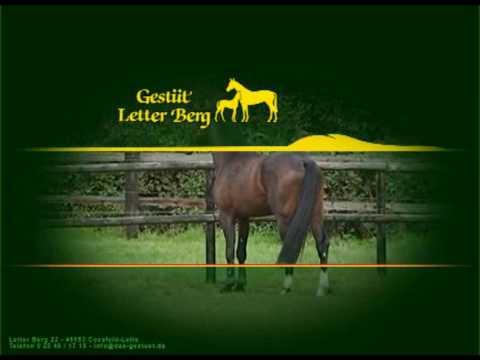 Das Gestüt Letter Berg in Coesfeld-Lette stellt sich vor.