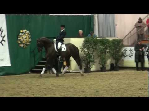 All Inclusive – Trakehner-Hengstschau in Münster-Handorf 04.02.2012