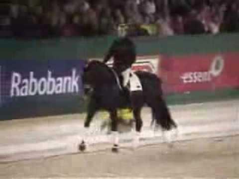 gribaldi dressage horse