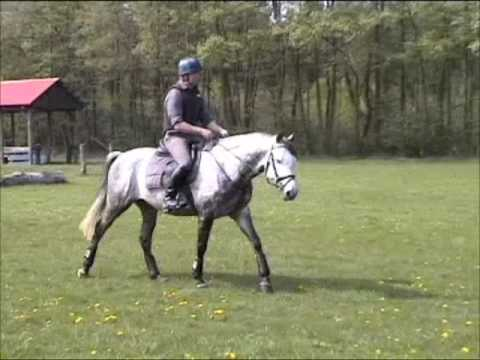 Trakehner Gentle Hill in Valluhn 2009