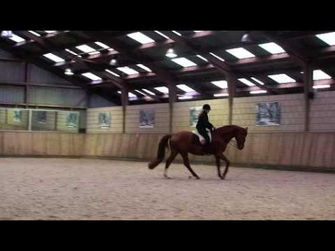 Sir Maestro – Trakehner Horse – Dressage horse