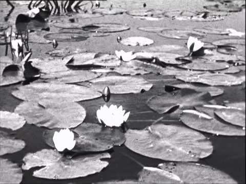 Sommer In Ostpreußen 1942 1/3