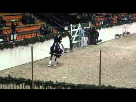 Proud Rocketti und Proud Rhett Bull, Hengstschau Neumünster 2012
