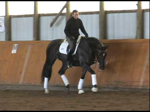 !!SOLD!!  FEI 6 YO Sir Donnerhall Mare – Dressage Professional's Dream Horse For Sale – $92K