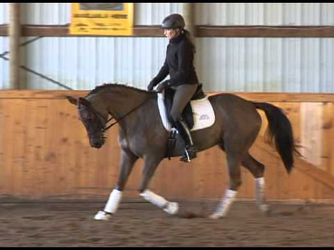SOLD Training Level Dressage – Pony Club Mount for Sale 15.3h 7 Yrs Trakehner $12,750