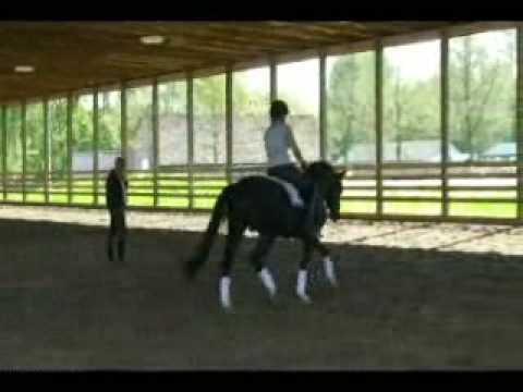 Pacific – Trakehner stallion – dressage clinic