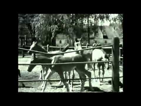 Frühling in Trakehnen 1936