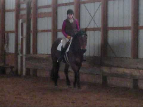 2006 Trakehner Mare by Emeer