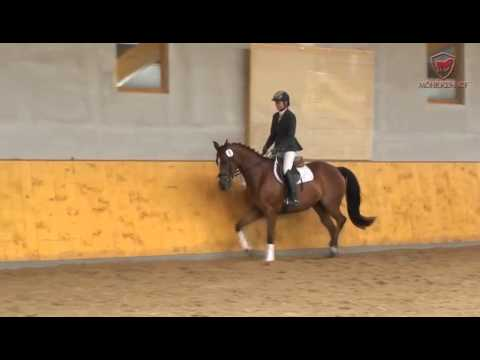 Pferdeauktion – Horse Auction: Trakehner Stute von Sir Chamberlain