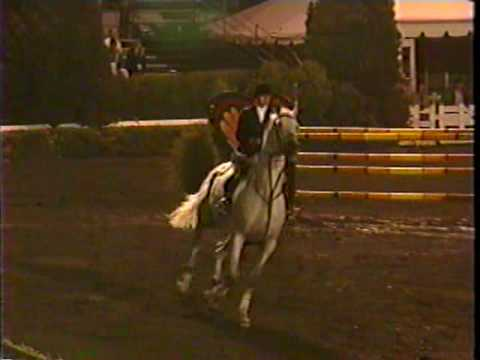 Special Memories trakehner show jumping stallion -World Cup class-Devon