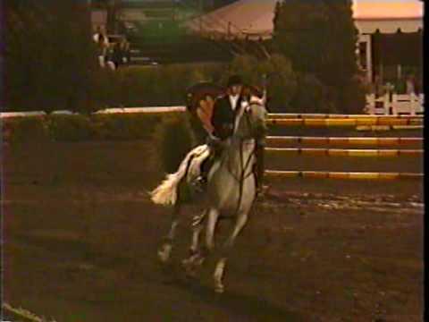 Special Memories trakehner show jumping stallion -World Cup class-Devon