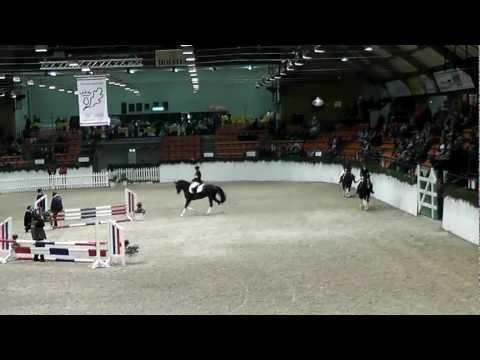 Proud Rocketti, Proud Rhett Bull, Proud Raffaelo – Hengstschau Neumünster 2013
