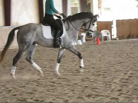 CONSTELLATION- GREY TRAKEHNER SALE VIDEO