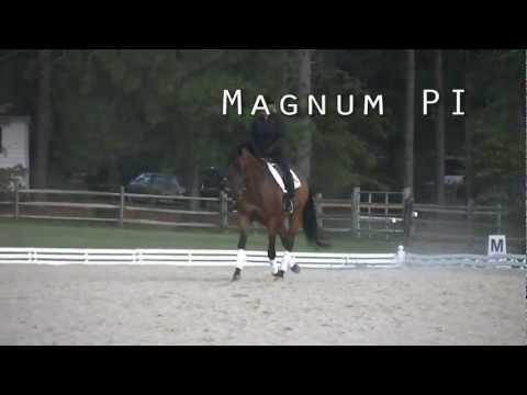 Trakehner Dressage Gelding For Sale