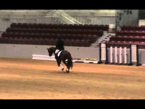 Holster- Trakehner Stallion (approval revoked)