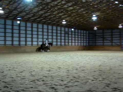 Rubel – 1995 Trakehner horse for sale