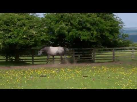 Bluewood Orianna, Trakehner mare by Trocadero out of Orana Pr St, St Pr St