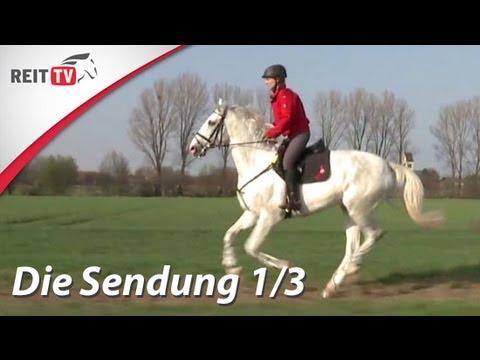 REITTV Die Sendung Teil 1/3 – Pferdeversicherung, Pferde kaufen