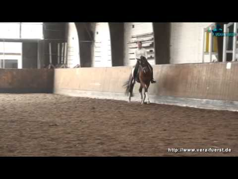 Trakehner dressage Horse for Sale – Royal Flush by Stallion Adamello