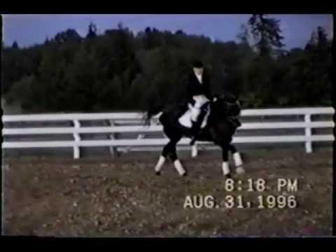 Dalnomer Trakehner stallion