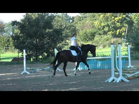 Trakehner Stute Träumchen Verkaufspferd