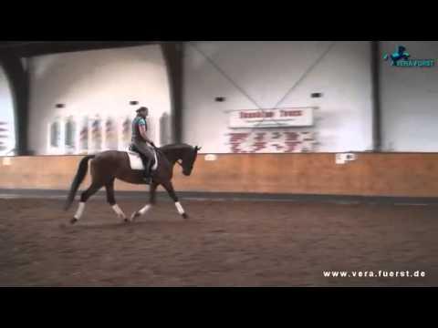 Dressage Horse Sale: Piacenza by Stallion E.H. Van Deyk