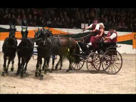 Trakehner Hengstmarkt 2011_mpeg2video.mpg
