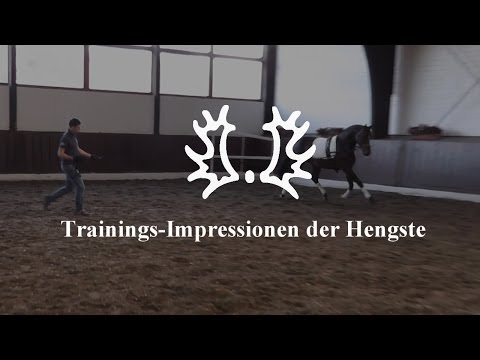 Trakehner Hengstmarkt 2013 – Trainings-Impressionen der Hengste